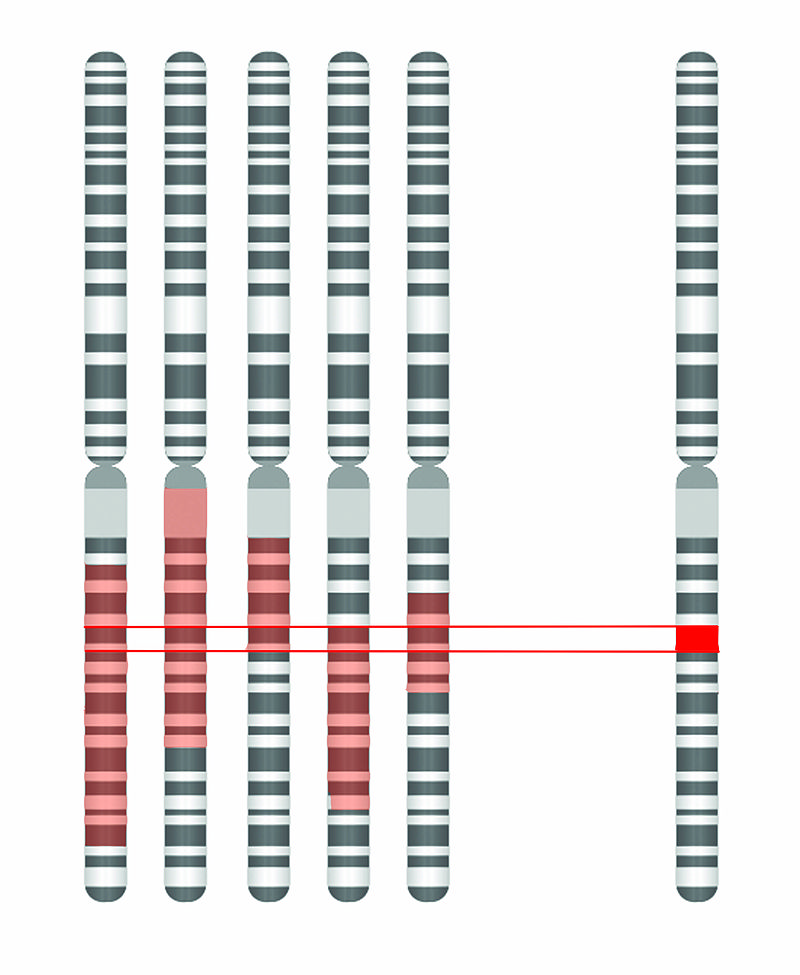 ۸۰۰px-Disease_Gene_Mapping_with_Multiple_Chromosomes